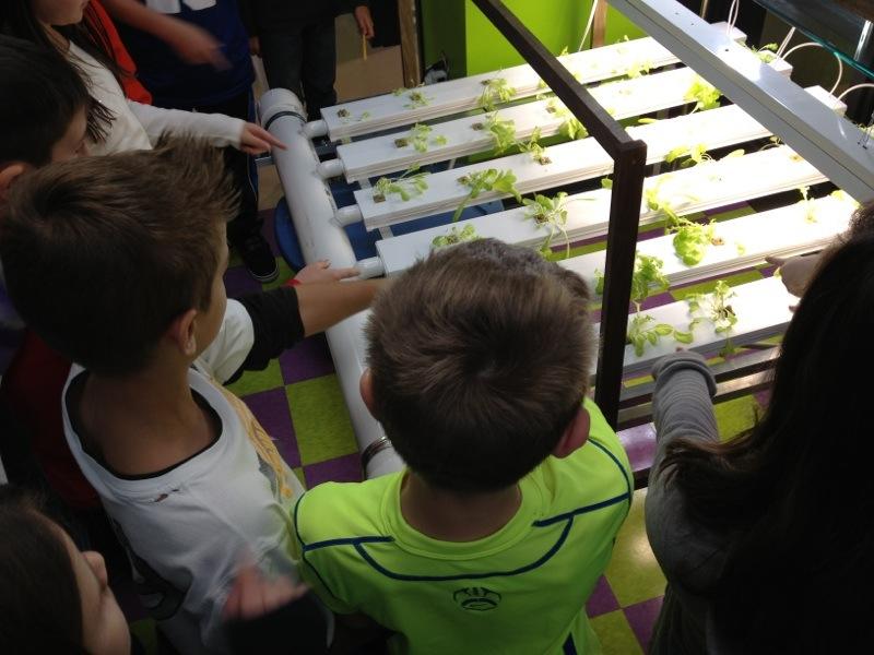 elementary school students view lettuce growing in school NFT (nutrient flow technique) hydroponic system.